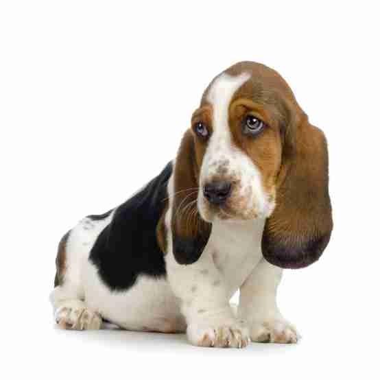 Testhund