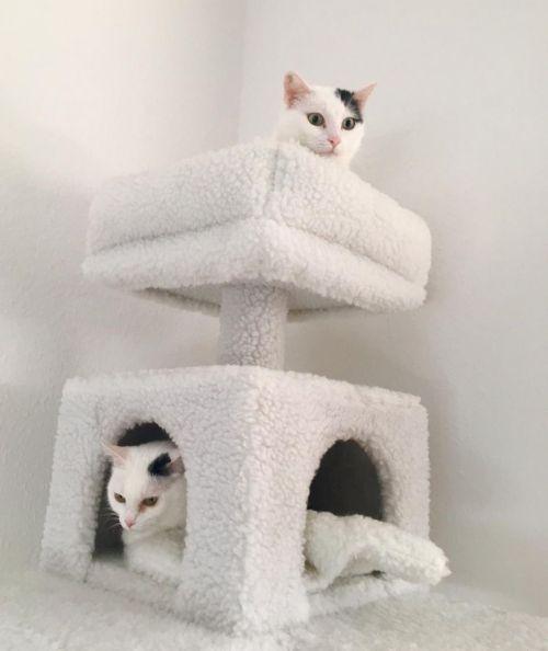Zwei Wohnungskatzen