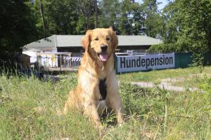 Hundepension Baden Baden