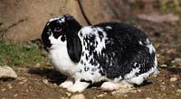 Kaninchen im Gras
