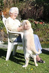 Golden Retriever mit einer älteren Frau